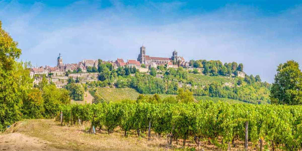 Burgundy DAY-6