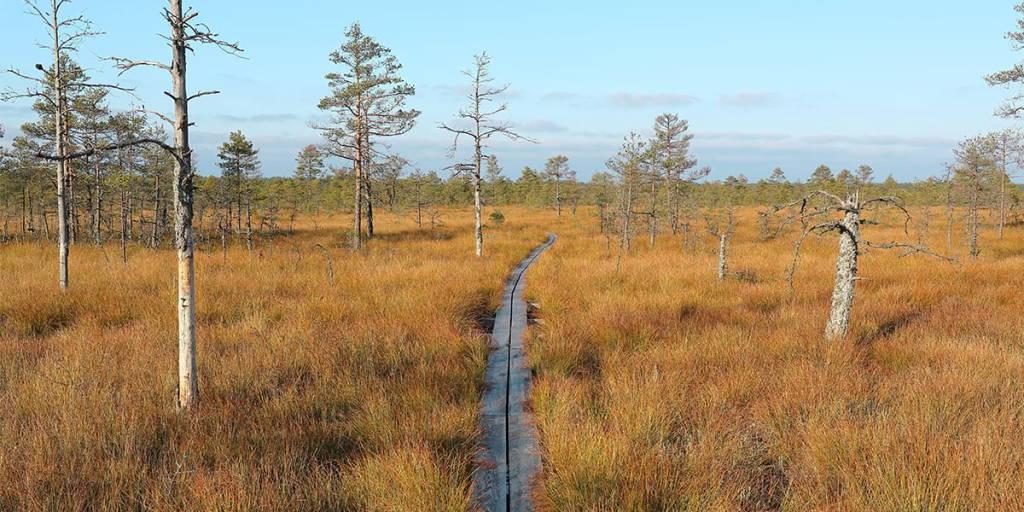 Hiking in Estonia - Maksim Shutov