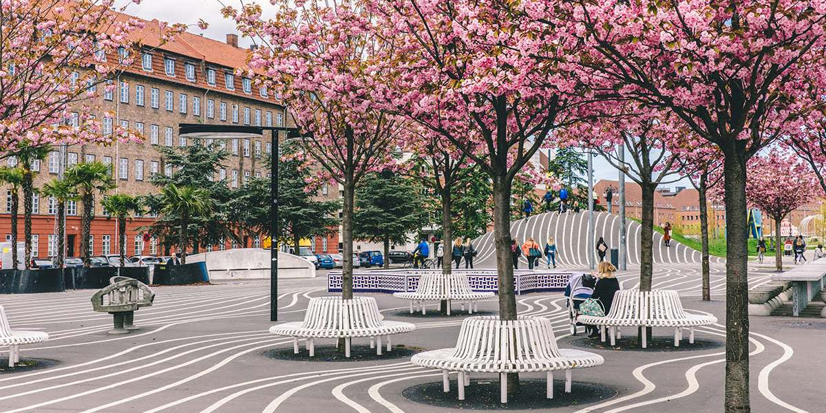 Vår i København, Cherry blossom - Photo Credit: Martin Heiberg