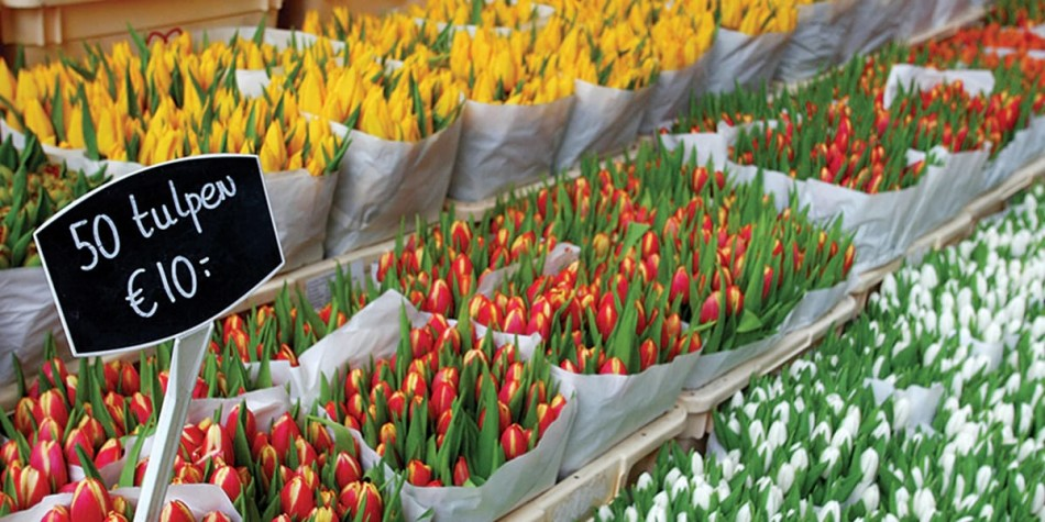 Colourful tulips for sale Amsterdam