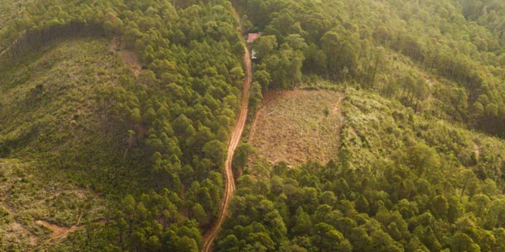 Carbon offsetting - forest