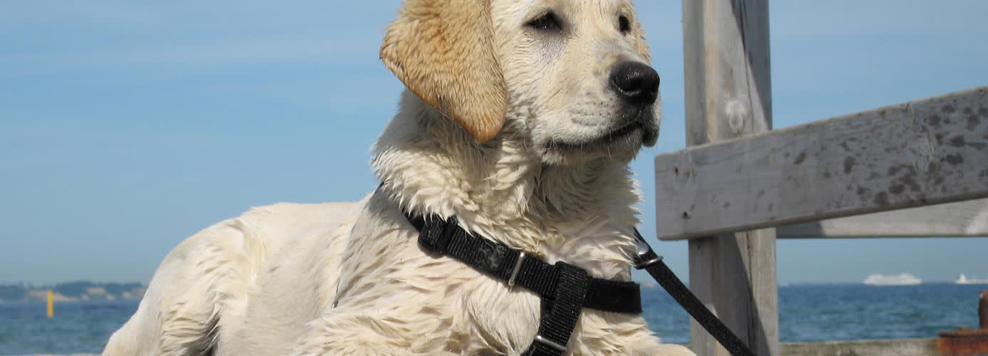 Pet travel with DFDS