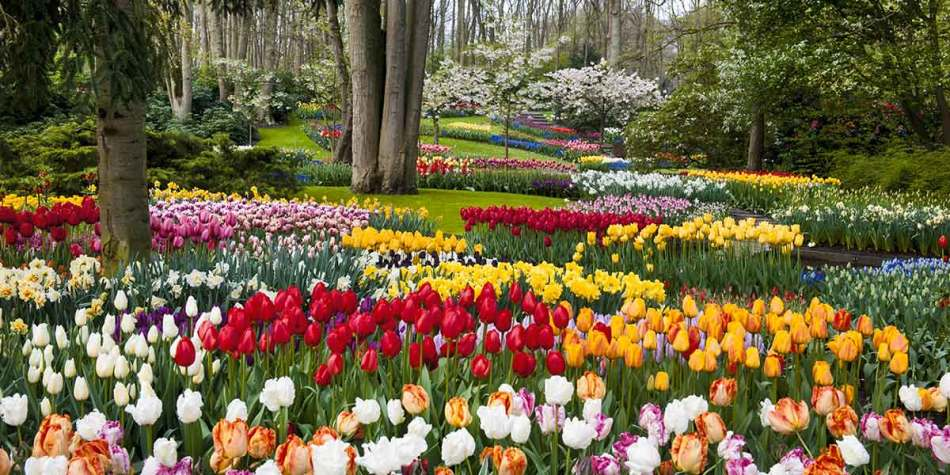 Keukenhof Gardens tulips in Holland