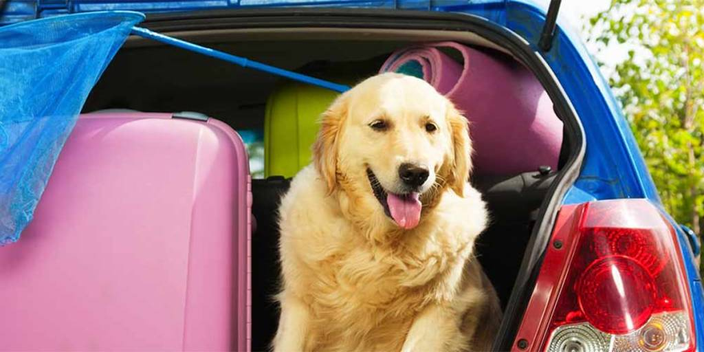 Multiple trip offer - dog in a car
