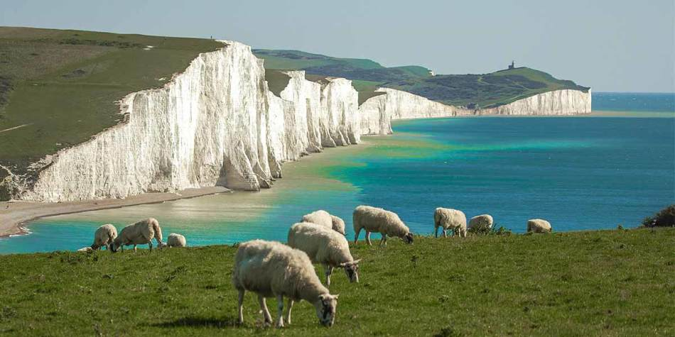Sheep on the hills at Seven Sisters