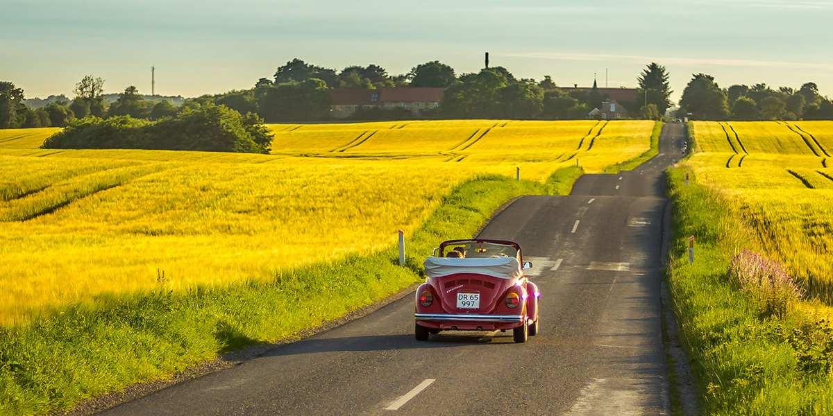 Roadtrip in Denmark - Visitdenmark -  yellow field -  photocredit Dennis Borup Jakobsen