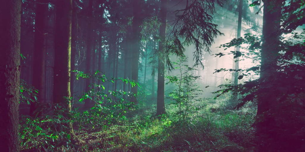 Carbon offsetting - forests