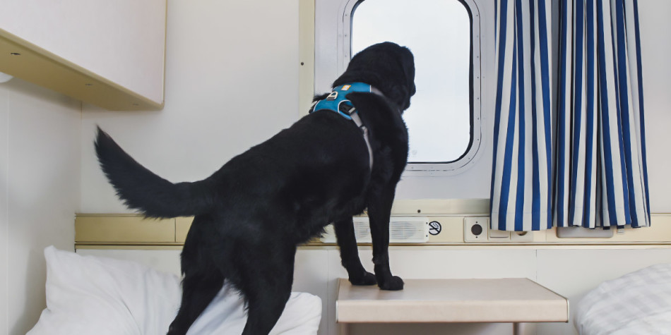 Pet friendly cabin onboard Newcastle-Amsterdam