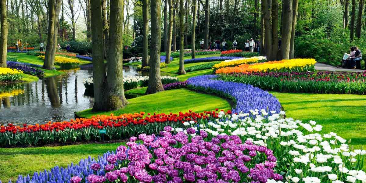 Flowers in bloom in Holland