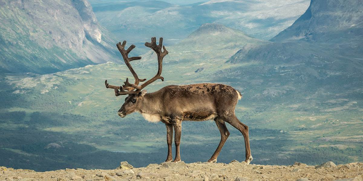 Natur i Norge