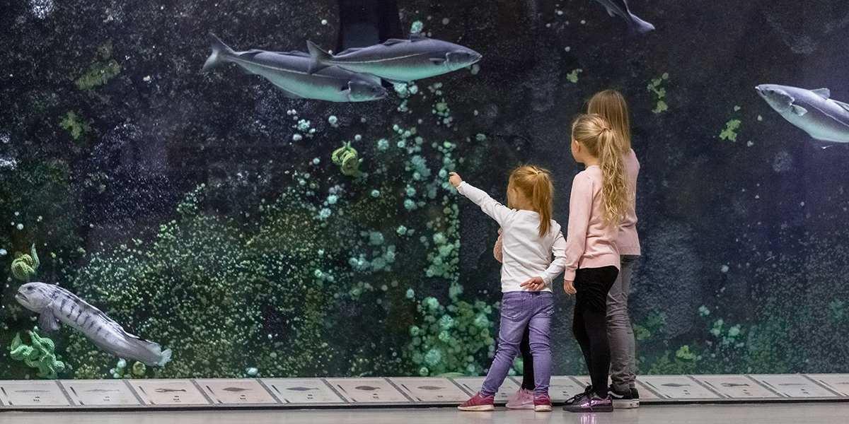 Visitnordjylland Nordsoen Oceanarium