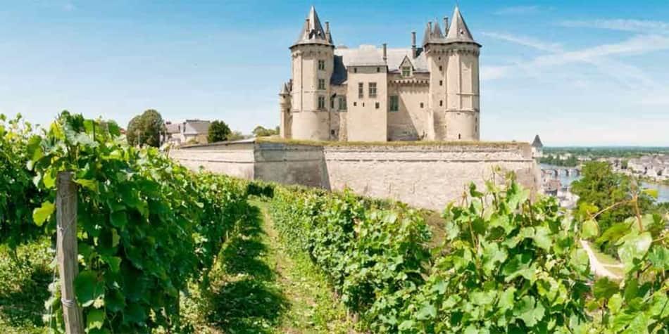 Vineyard in Loire Valley, France