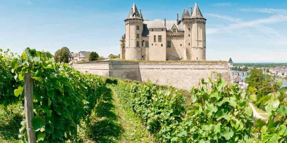 Vineyard in Loire Valley, France