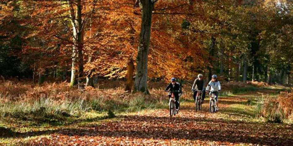 Cycling through the forest in Hampshire