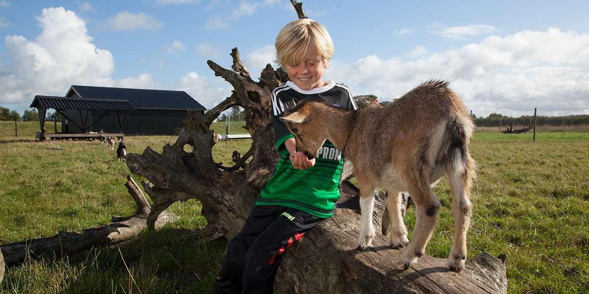 Lalandia Billund - playing with animals