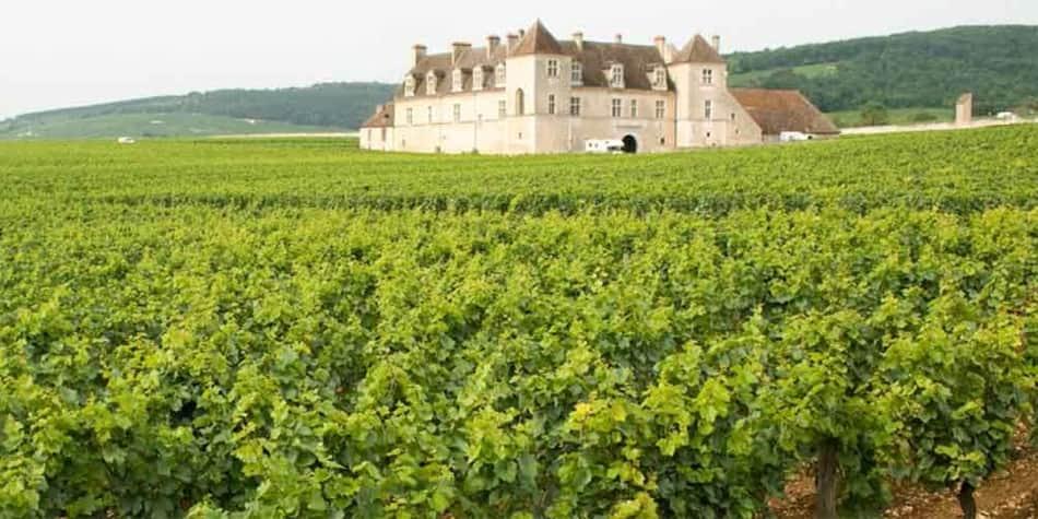 Wine regions in France - Burgundy