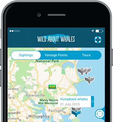 Wild About Whales App on iPhone