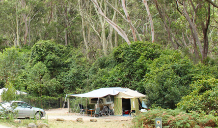 Pebbly Beach campground in Murramarang National Park