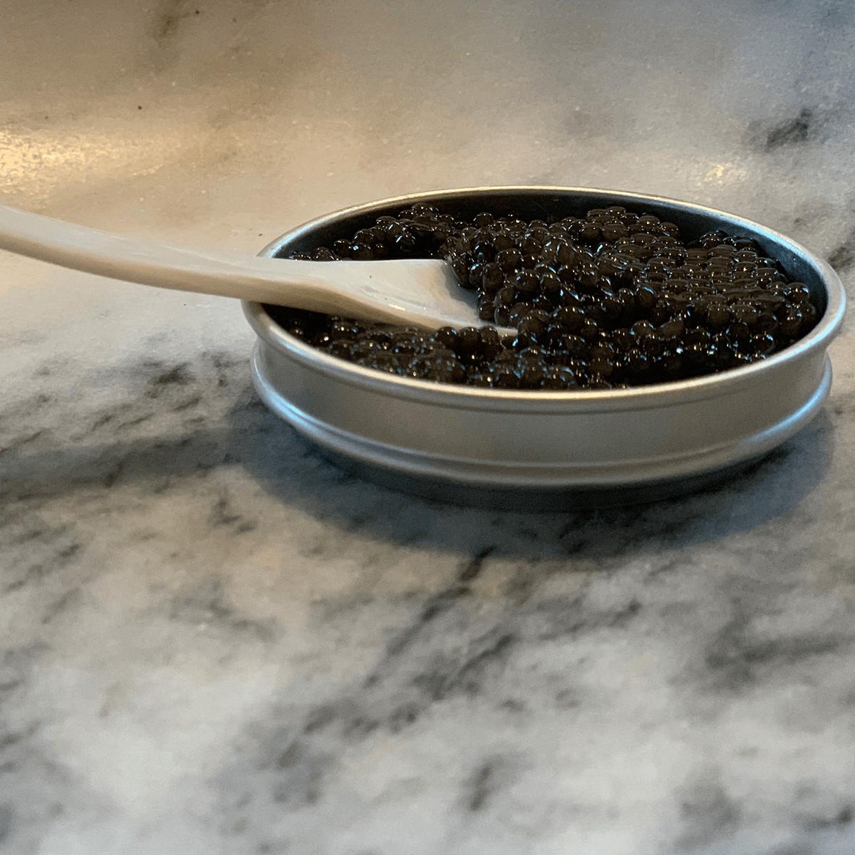 Caviar 1200x1200