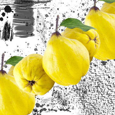 800x800 quince