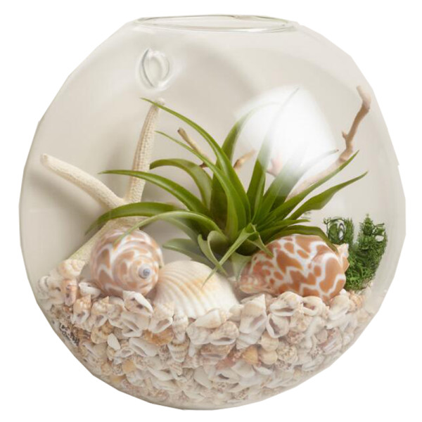 World market wall mounted live plant glass terrarium