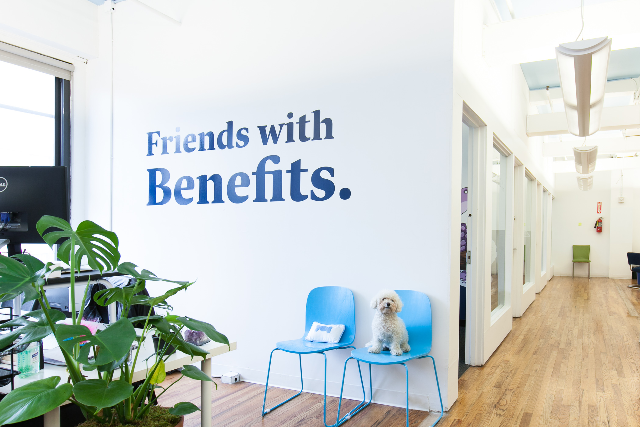 justworks has a dog friendly office and the photos speak for themselves