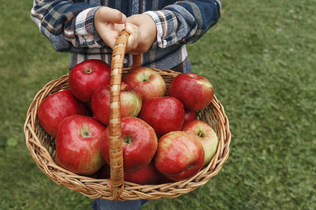 A child learning variables holding a basket full of apples
