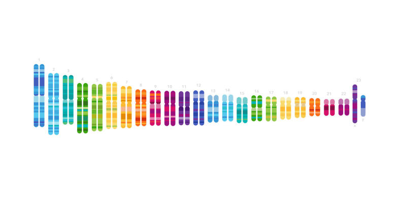 23andme DNA sequence