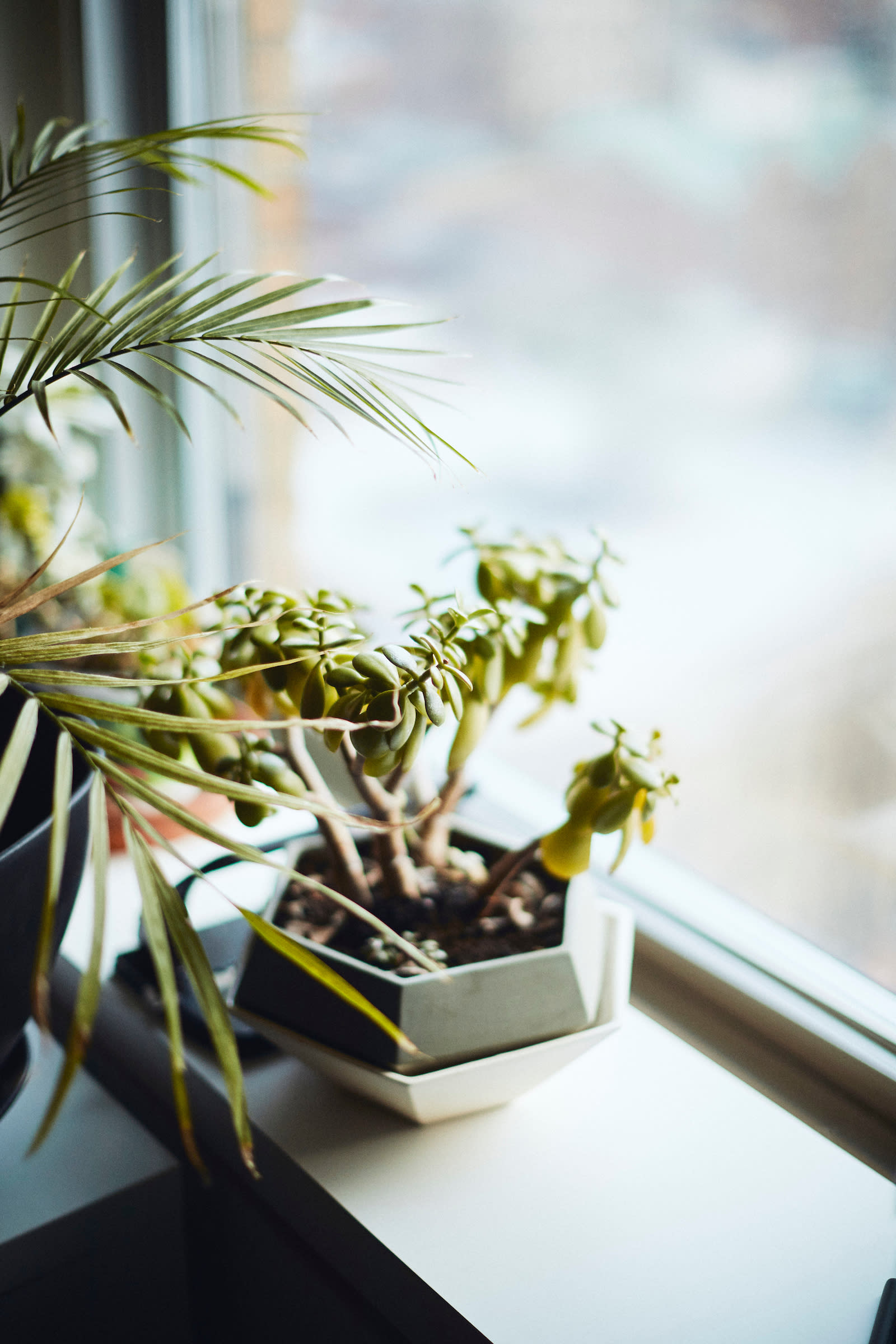 a plant on a windowsill at Apartment Therapy