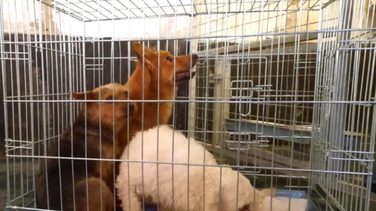 Landelijke Inspectiedienst Dierenbescherming (LID)