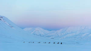 Light-winter Dog-sledding Arctic-landscapeAgurtxane-Concellon Landscape-1920x1080 02