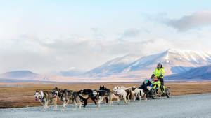 01 GreenDog Dogsled Autumn blog tip Agurtxane Concellon toppbilder