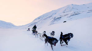 Light-winter Dog-sledding-Adventure 1920x1080 01