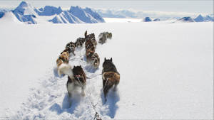 Dogsled-Expedition_Foxdalen_Dogsledding_Winter-landscape_Explore_Travel_Adventure_Svalbard_Green-Dog_Landscape-1920x1080_03