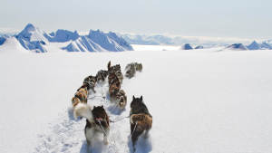Light-winter Dog-sledding Green-Dog Arctic-wilderness Landscape-1920x1080 01