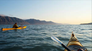Ultimate_Kayak_Expedition_Wildlife_Barentsburg_Ny-Aalesund_Adventure_Svalbard_Glacier_Espen-Øverdahl