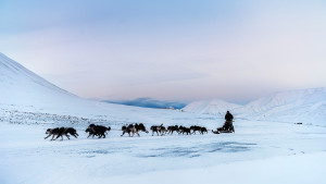 Dogsled-Expedition Winter-landscape Explore Travel Adventure Svalbard Green-Dog