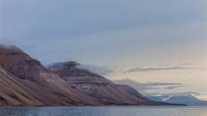 Isfjord-safari-bird-cliffs boattrip arctic-wildlife Agurtxane-Concellon Landscape 1920x1080 01