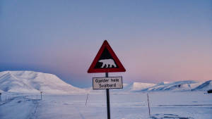 Light-winter_Snowcat_Panorama-Longyearbyen_polarbear_funnysign_Agurtxane-Concellon