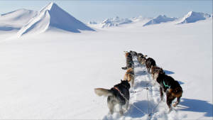 Dogsled-expedition Juvahytta Explore Adventure Svalbard Winter-landscape Dogsledding Green-Dog