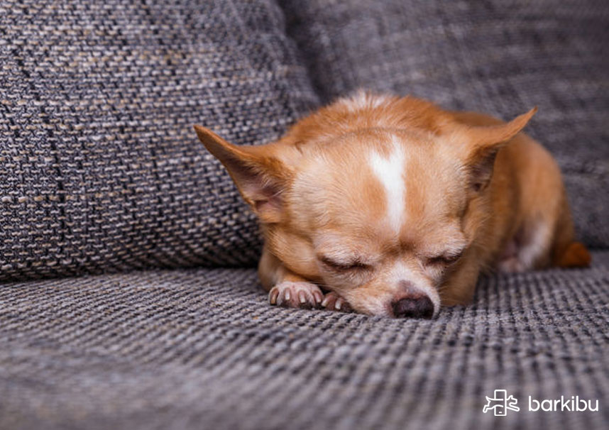 causas de hemorragia nasal en perros