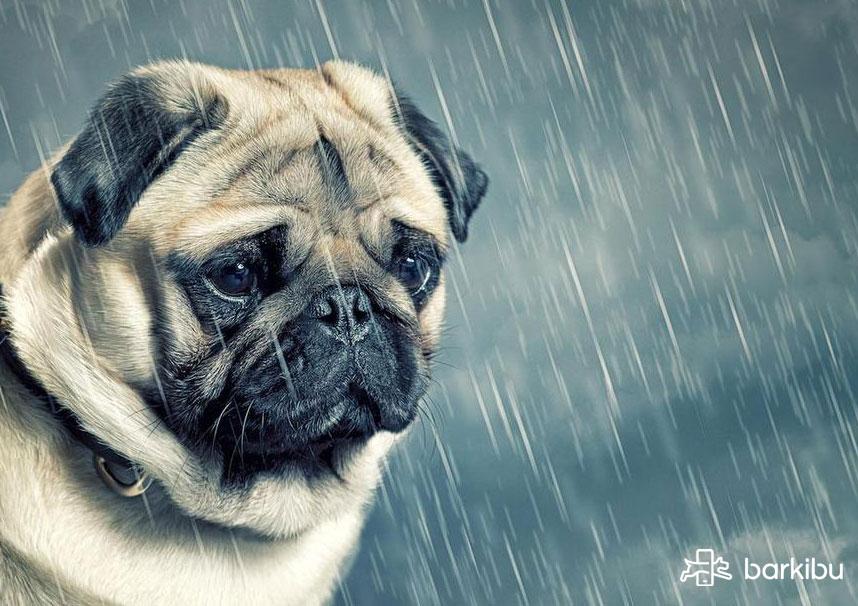 Mi Perro Está Triste Y No Come, ¿qué Puedo Hacer