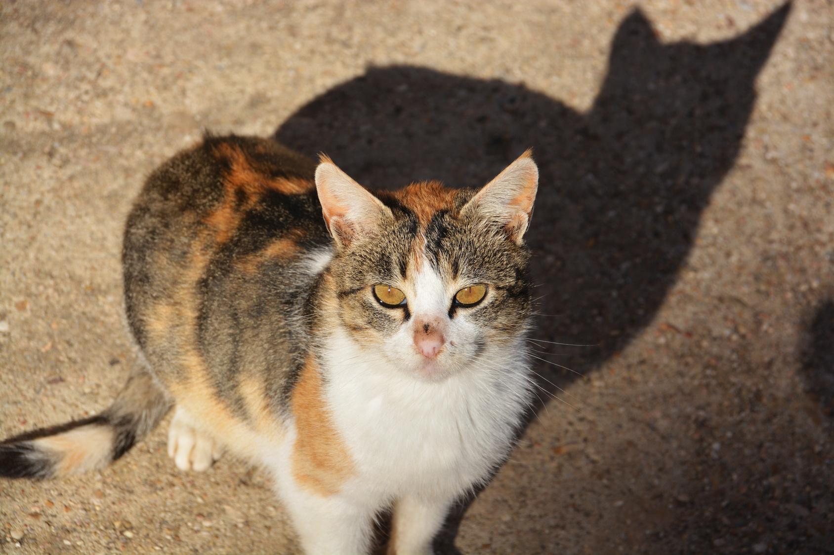 Los Gatos Sienten Amor Por Los Humanos Un Nuevo Estudio Revela La