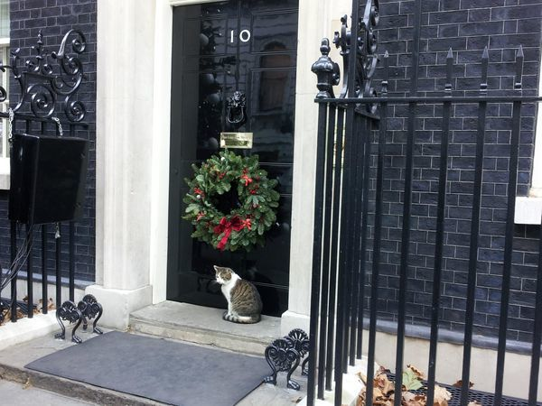 Gato larry downing street