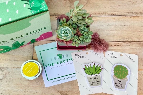 Gift for the Plant Lover: The Cactique
