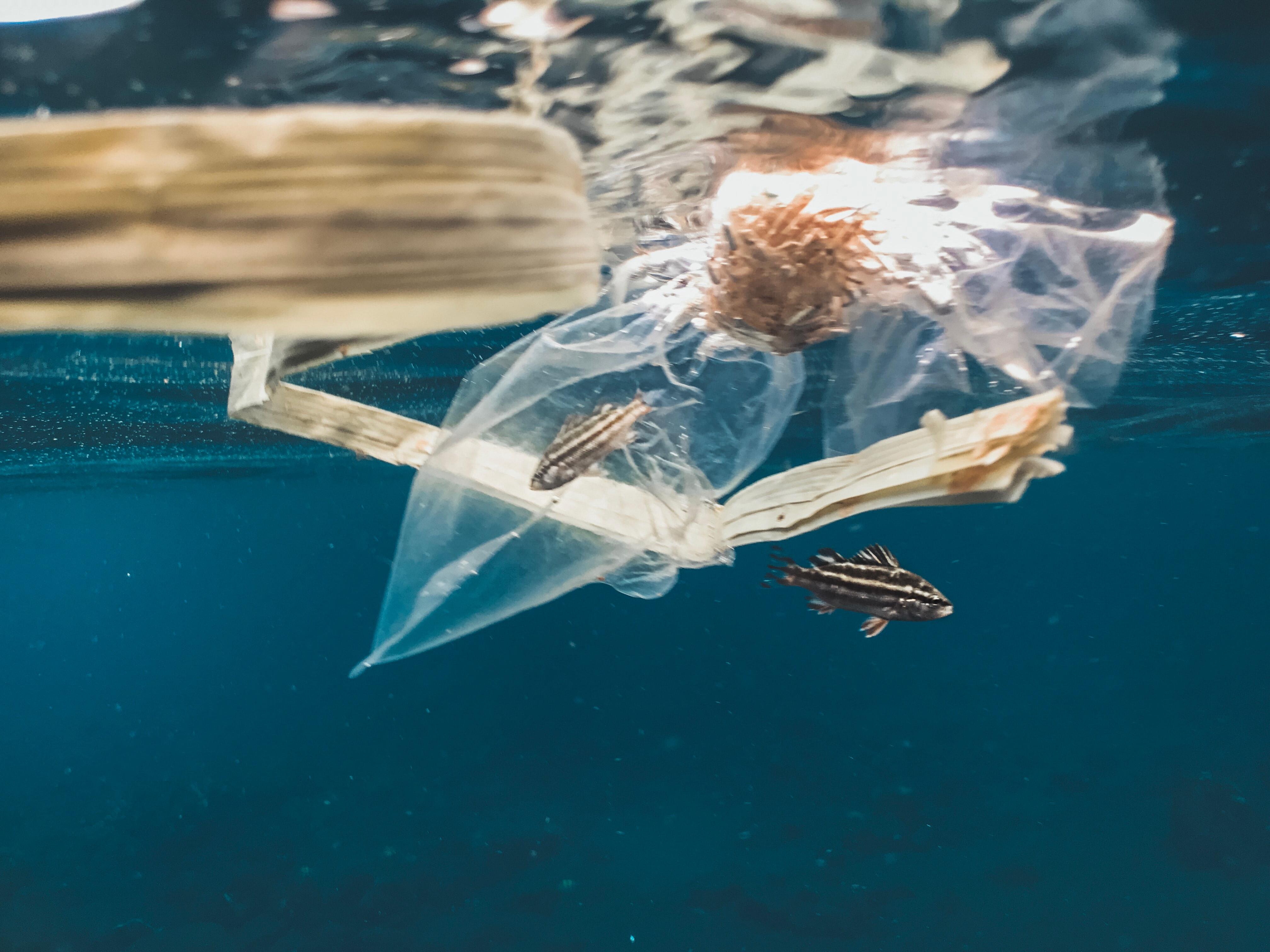 Plastic in the Oceans