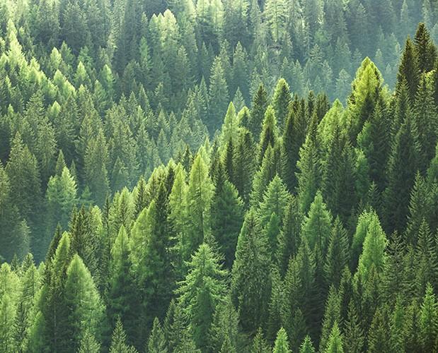 Westch Environmental Image