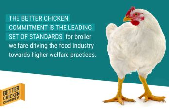 How We're Supporting Improved Animal Welfare