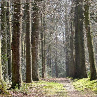 Forest Netherlands