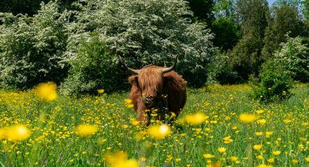 surroundings-animals-nature-europarcs-het-amsterdamse-bos